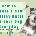 Healthy Habit for Your Dog, Newburyport