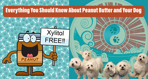 Peanut Butter and your dog, xylitol