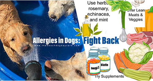 Allergies in Dogs, Newburyport MA