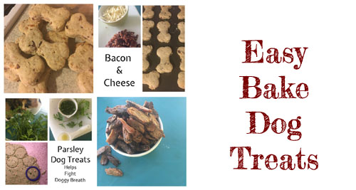 Easy Bake Dog Treat Recipes, Newburyport MA