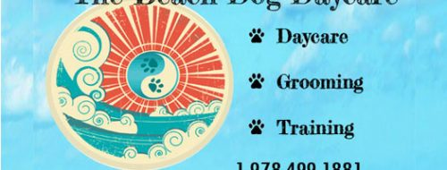 Doggy Daycare, Grooming & Training, Newbury MA
