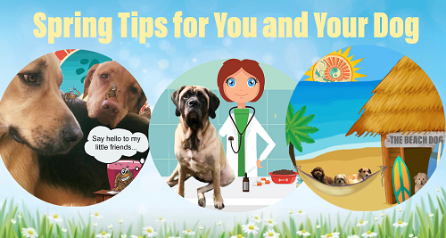 Spring safety tips for you and your dog, Newburyport