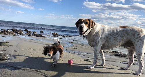 Dogs on the Beach, off leash dog parks, Newburyport