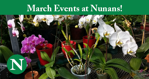 Nunan's March Classes