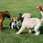 Off leash dog parks, Newburyport