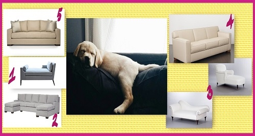 Best Sofas for Napping, lounging and reading , Newburyport
